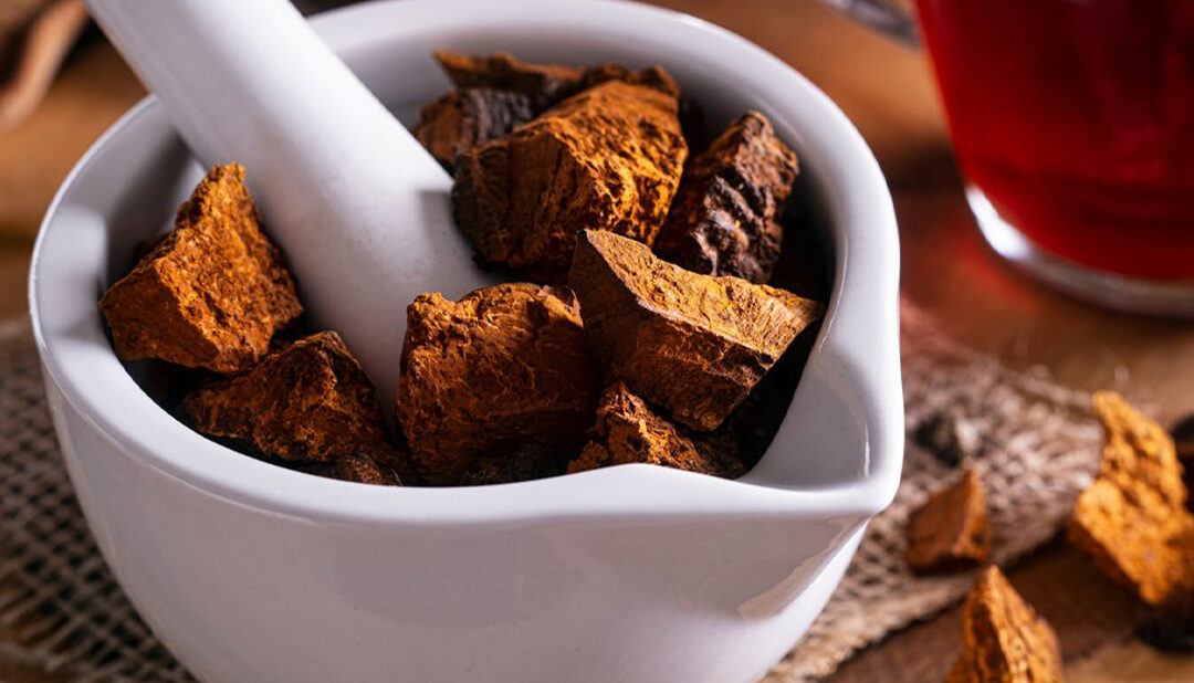 THE ULTIMATE GUIDE TO CHAGA MUSHROOM TEA