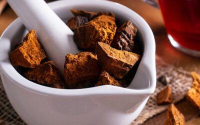 THE ULTIMATE GUIDE TO CHAGA MUSHROOM TEA