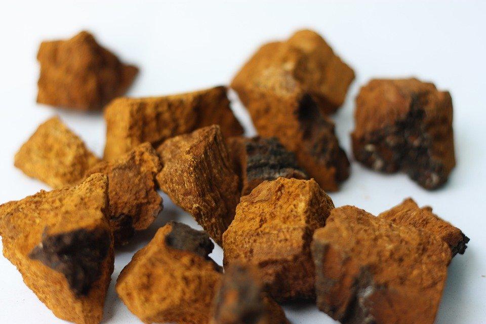 pieces of Chaga mushroom