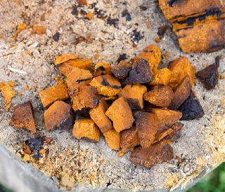 Chaga Mushrooms: Fun Facts You Should Know