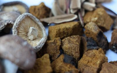 The Complete Guide To Medicinal Mushrooms
